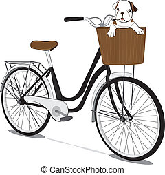 Bicycles and french bulldog Puppy on white background