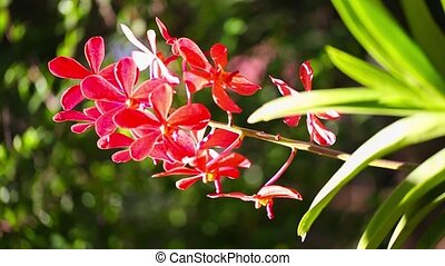 Beautiful red Orchid waving in the wind