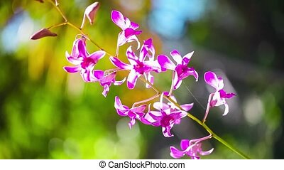 Beautiful purple Orchid waving in the wind