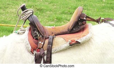 Saddle, Horses, Horseback Riding