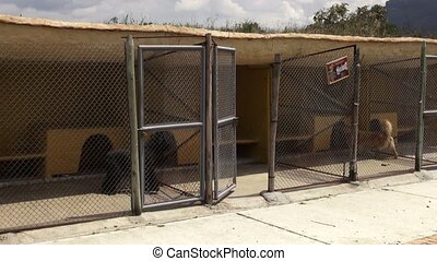 Anxious Caged Dogs, Canines, Neglect, Abuse