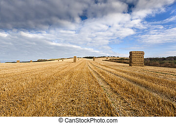 Stacked bales of straw in farmers field, Yorksire Wolds