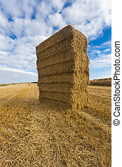 Straw bales stacked in field at harvest time