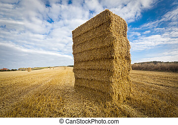 Straw bales stacked in field at harvest time, Yorkshire