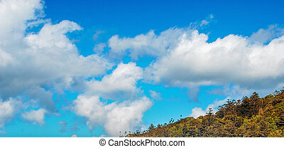 Blue sky with clouds over green forest