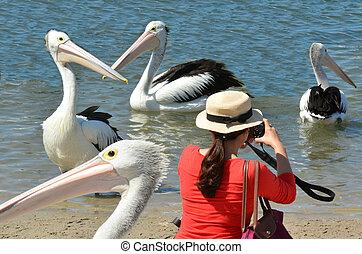 Wasser, Pelikan,  -, vögel