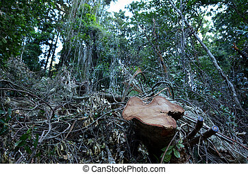 Deforestation - A dead tree after rainforest cut and...