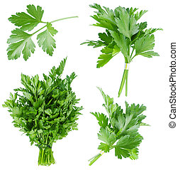 Set of fresh parsley