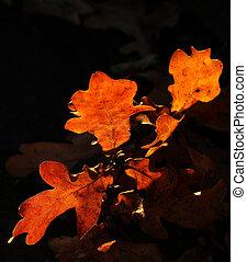 Closeup of oak tree leaves in fall