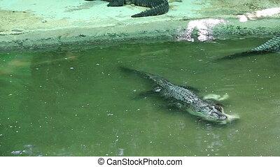 Scene with Big Crocodile