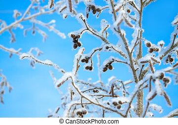 árbol, invierno, cubierto, nieve, Plano de fondo, azul,...