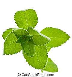 Corn Mint isolated - Fresh Corn Mint Mentha arvensis...