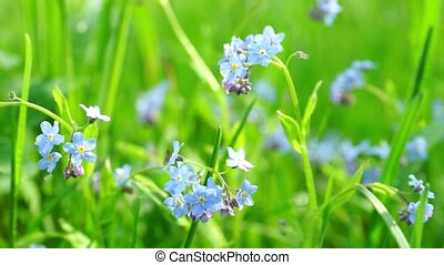 Beautiful blue flowers at field - Close up view at summer...