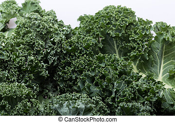 A healthy fresh curly kale