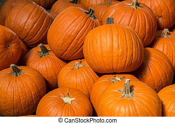 Pumpkins - Pumpkin background