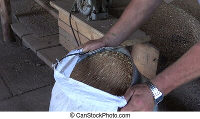 farm worker sift grain - Farmer man pour sifted grain from...
