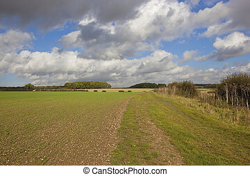 farming in autumn - a grassy farm track beside a newly...