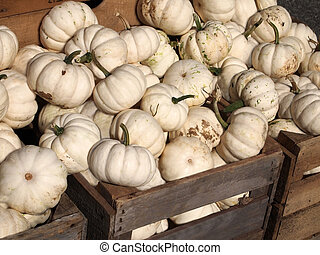 White Pumpkins - White pumpkins piled into wooden crates in...