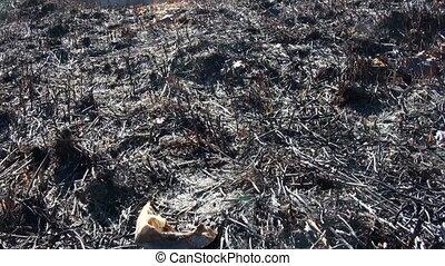 Burned grass, ash coals.
