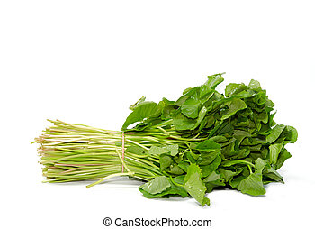 Centella asiatica vegetables isolated on the white...