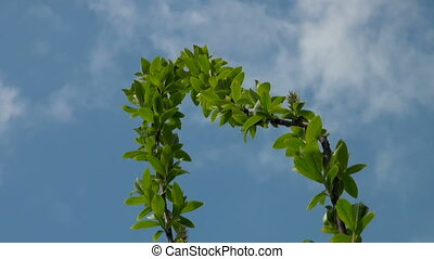 Green tree against the sky