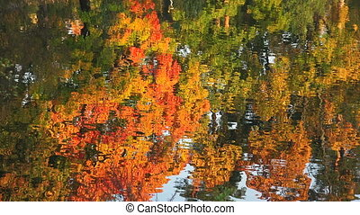 Reflection of autumn trees in the water. Autumn Landscape.