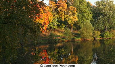 Autumn forest. Lake. Autumn Landscape. Real time.