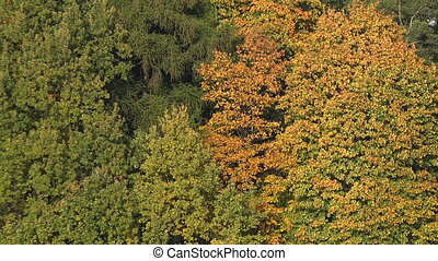 Autumn forest Autumn Landscape Real time