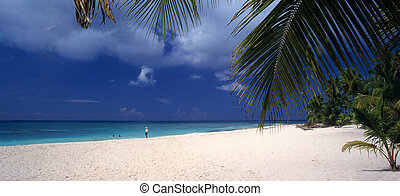 Saona island beach - Dominican republic