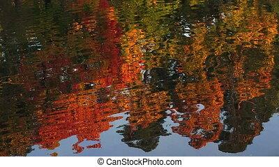 Autumn forest. Lake. Autumn Landscape.