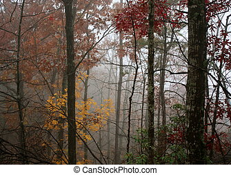 Smoky Mountain Fog - Fog in the Tennessee Smoky Mountains