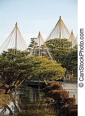 Karasaki pine in Kenroku-en, Kanazawa, Japan