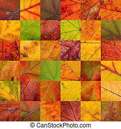 Patchwork of Autumn Leaves - A warm patchwork of thirty six...