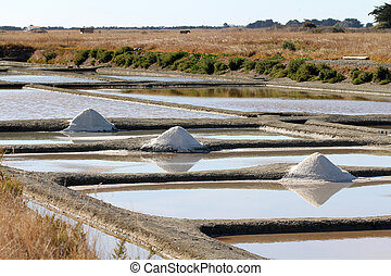 Salt marshes of Noirmoutier (Salt harvest - France)