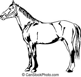 outline of a standing horse - black and white vector outline...