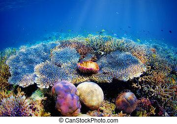 Underwater coral reef - Colorful underwater coral reef on...