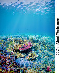 Underwater coral reef - Colorful underwater coral reef on...