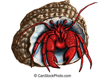 hermit crab isolated on a white background