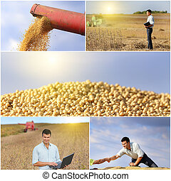Soybean harvest - Collection of soybean field and harvesting...