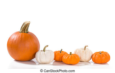 Pumpkins against white background - Pie pumpkin and mini...