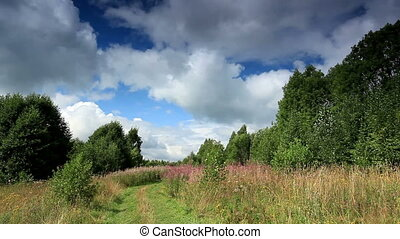 clouds behind the trees in the forest Moiseevichi, Valdaysky...