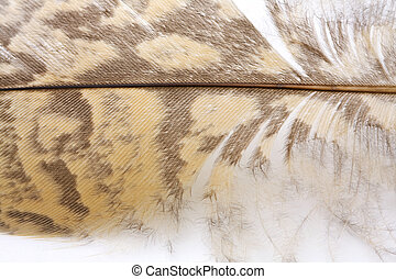 Feather Macro - Close-up of feather from a wild fowl.