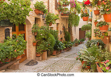 Flower street in the town of Spello (Umbria, Italy) - Street...