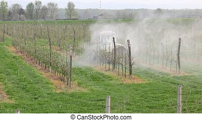 Agriculture, spraying of orchard - Tractor sprays...
