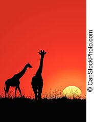 Giraffes black silhouette on the sunset in Africa