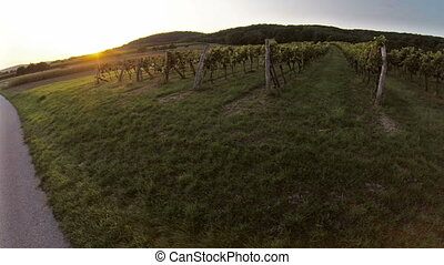 Sunset over winery aerial footage - Aerial drone footage
