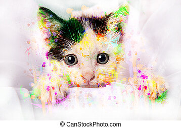 Cute Kitten with water paint splash - A photograph of a...