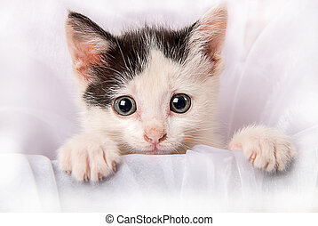 Baby kitten looking out of a box - A photograph of a black...