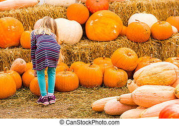 Pumpkin patch on sunny Autumn day
