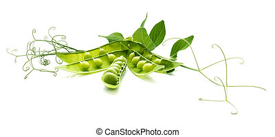 The still life of the green peas decorated with the tendrils...